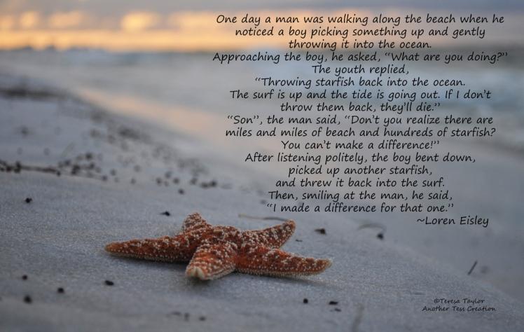 Starfish Story.jpg