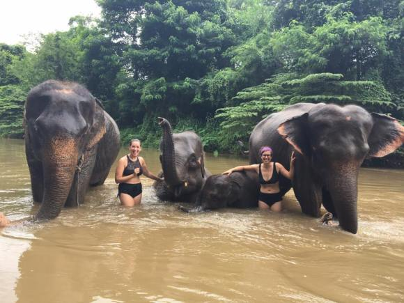 Thailand Elephants 2018